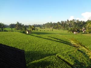 Bali 2014 161