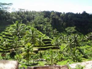 Bali 2014 197