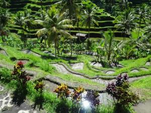 Bali 2014 204